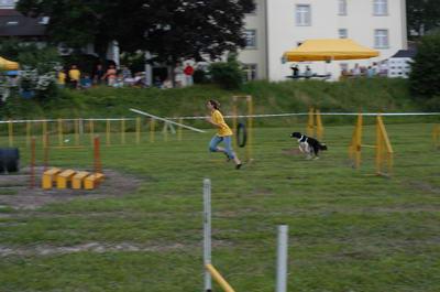 Hundesportshow